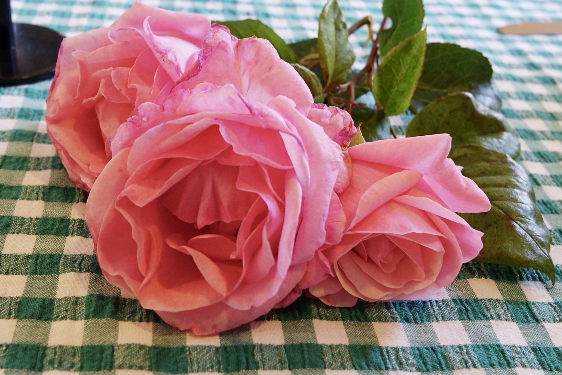 3 pink flowers lying on a green and white checked table cloth.