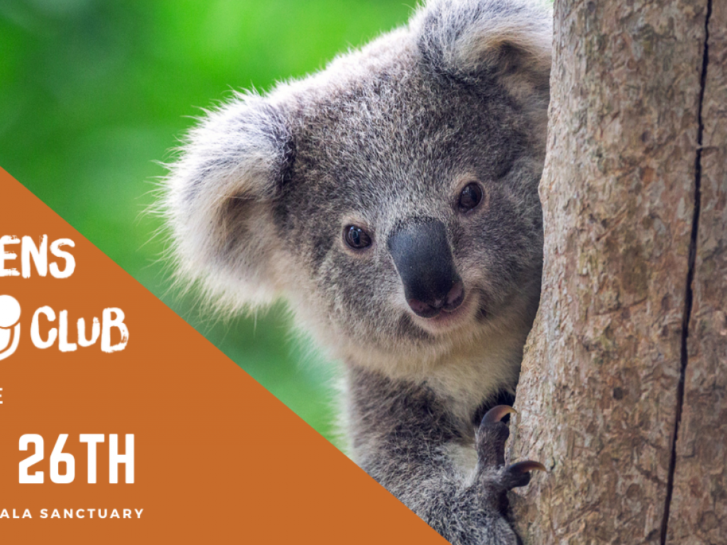DSQ Club/ Teens Brisbane – Lone Pine Koala Sanctuary thumbnail.